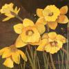 Daffodils Original Acrylic Painting by Ginny Abblett SOLD