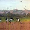 Magpies on Coyote Fence Original Acrylic Painting by Ginny Abblett SOLD